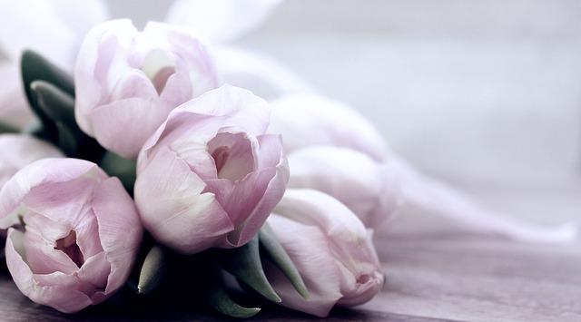 משלוחי פרחים בגבעת שמואל