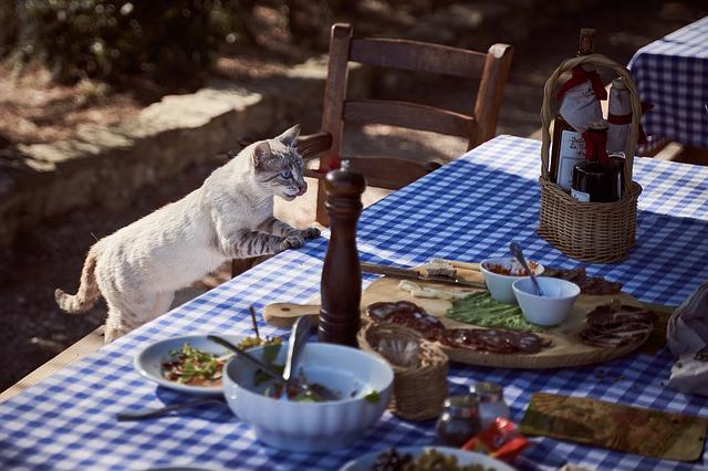 מזון רפואי לחתולים