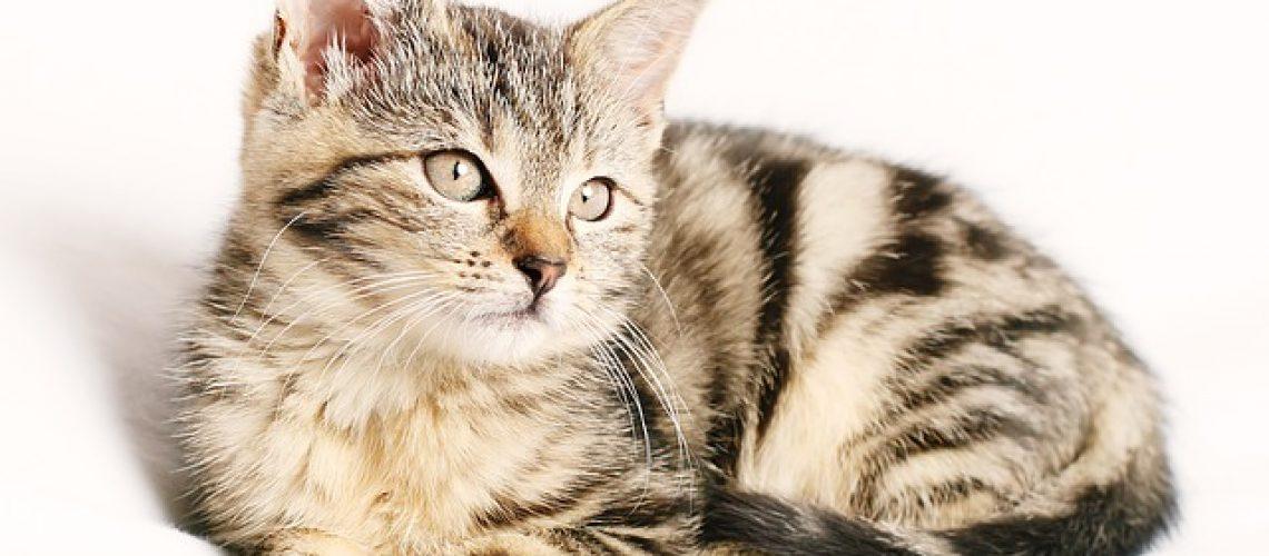 וטרינר לחתול