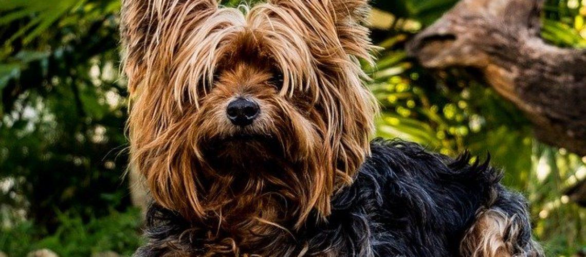 כלבים גזעיים