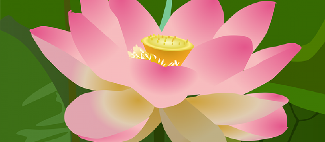 lotus-312694_640